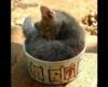 egy csészényi cica